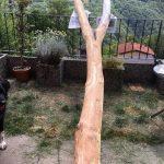 tronco-non-dipinto